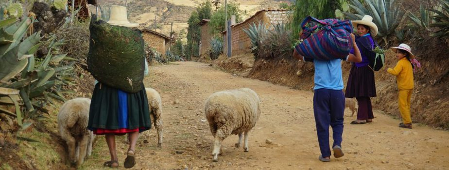 Families and sheep walk down a street