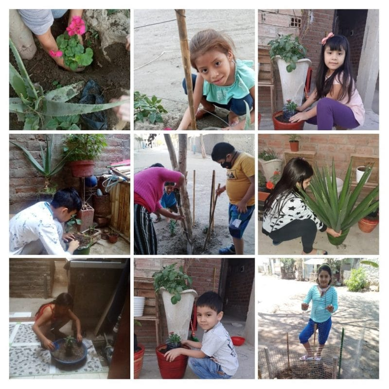children planting gardens in their neighbourhood